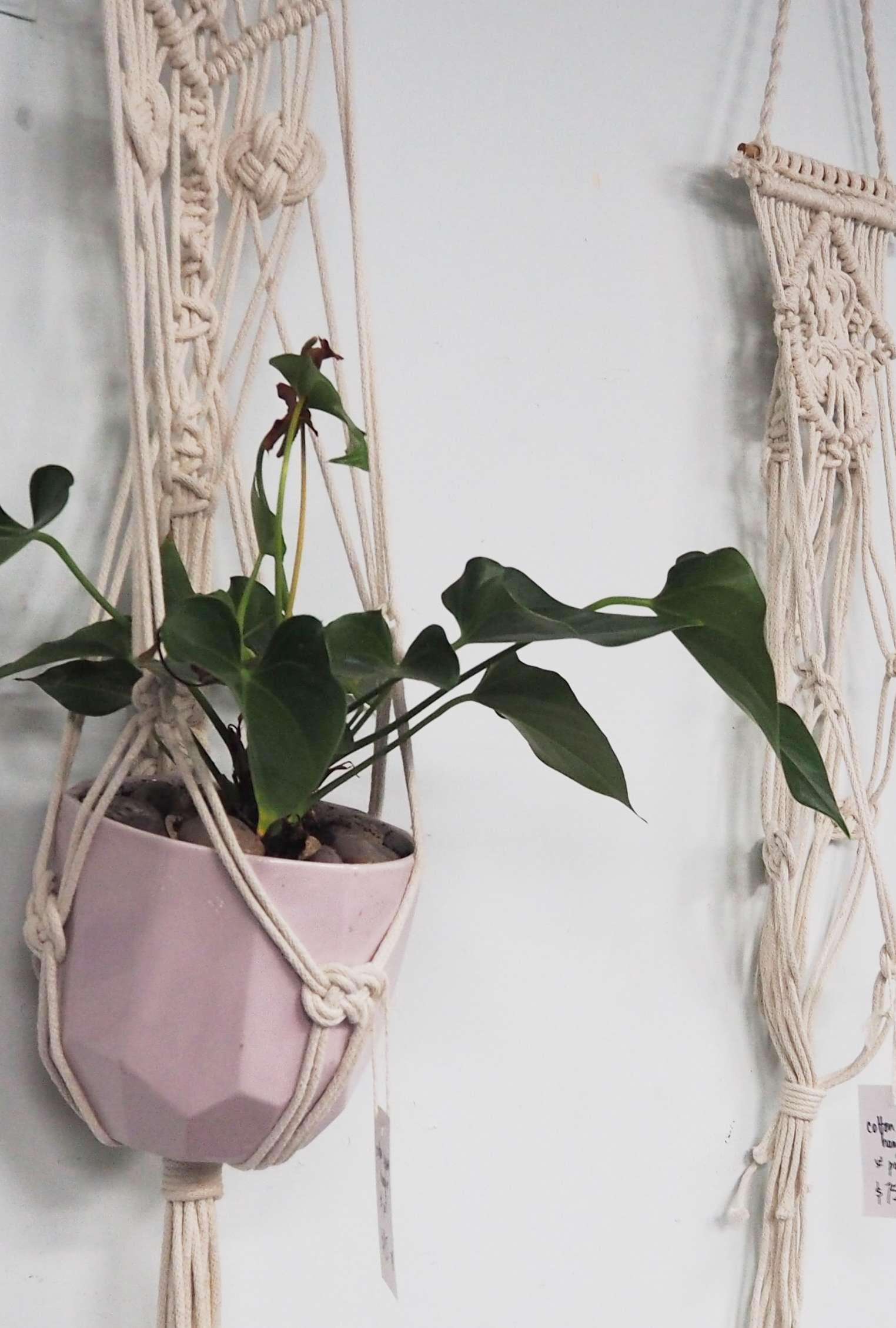 BSS20: Macrame Pot Plant Hanger