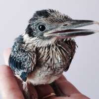 BSS22: Wildlife Care